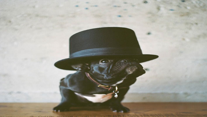 Pug_Hat_708